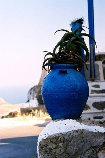 The blue pot