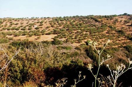 Land at Potamos.