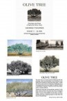 George Tzanne's Olive Tree Exhibition