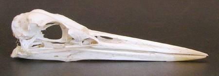 Heron found in Paliopoli
