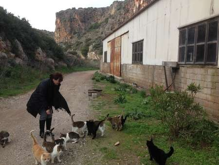 Cats paradise - the Fishermans wharf slightly to the north of Ayia Pelagia