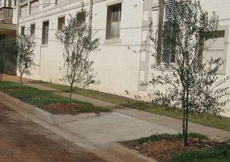 Olive Tree Memorial Garden - $500 on footpath in Cunningham Street