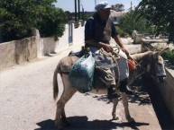 The donkey man IV