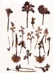 Orchid Sampler