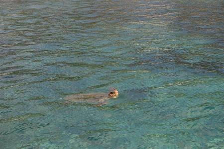 kapsali turtle