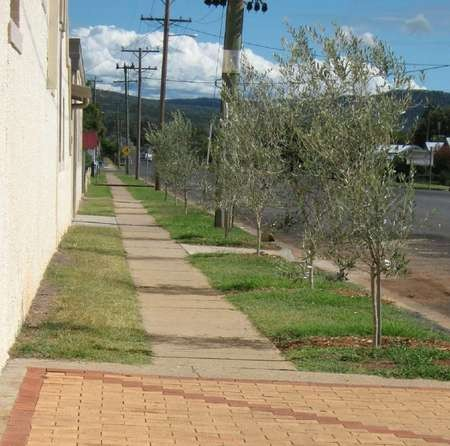 Olive Tree Memorial Garden - $500 trees looking west A