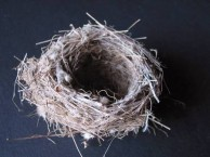 Bird nest from Paliopoli