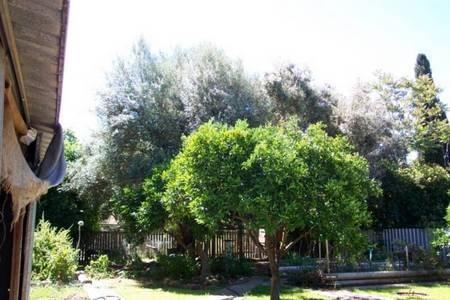 George & Alexandra (Proto)Psaltis's Olive trees. 70 years hence. Gilgandra, NSW.