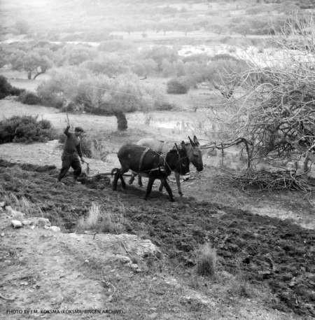J.M. Koksma: Ploughing, Kythera 1962
