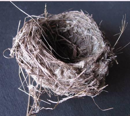 Bird nest from Fratsia