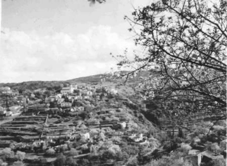 Karavas with Almond tree in blossom. 1950's.